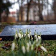 Friedhof(s)natur