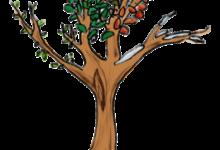 Umgestaltung Schulgarten: Garten der Sinne